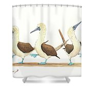 Three Blue Footed Boobies Shower Curtain