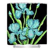Three  Blue Irises Shower Curtain