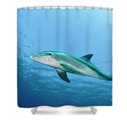 three year old Dolphin  Shower Curtain