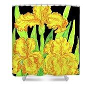 Three Yellow Irises, Painting Shower Curtain