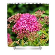 Tiny Pink Spirea Flowers Shower Curtain