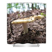 Toad Stool II Shower Curtain