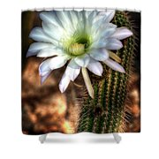 Torch Cactus - Echinopsis Candicans Shower Curtain