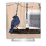 Transfixed Shower Curtain