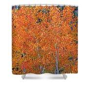 Translucent Aspen Orange Shower Curtain