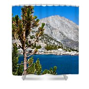 Treasured Pine Shower Curtain