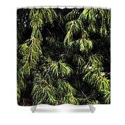Tree 8 Shower Curtain