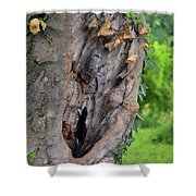 Tree Bark Detail, Natural Background. Shower Curtain