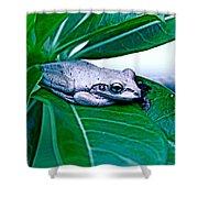 Tree Frog On Desert Rose  Shower Curtain