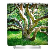 Tree In Golden Gate Park Shower Curtain