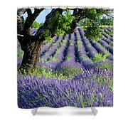 Tree In Lavender Shower Curtain