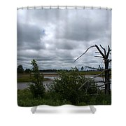 Tree In The Wetland Shower Curtain