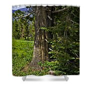 Tree In Vail Shower Curtain