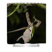 Tree Snake Eating Gecko Shower Curtain