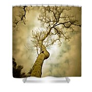 Tree Top In The Clouds Shower Curtain