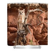 Treed Mountain Lion Shower Curtain