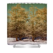 Trees In Oregon Winter Shower Curtain