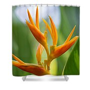 Tropical Bird Of Paradise, Sri Lanka Shower Curtain