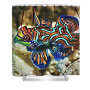 Tropical Fish Mandarinfish Shower Curtain