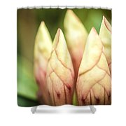 Tropical Garden 7 Shower Curtain