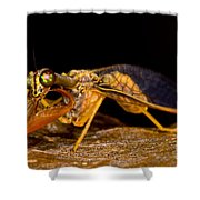 Tropical Mantispid Shower Curtain