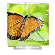 Tropical Queen Butterfly Framing Image Shower Curtain