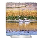 Tranquil Trumpeter Swans Shower Curtain