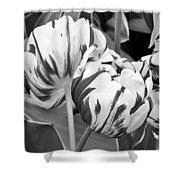 Tulip 11 Shower Curtain