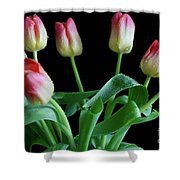 Tulip Bouquet Shower Curtain by Tracy Hall