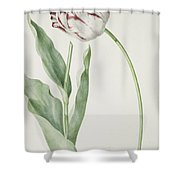 Tulip Grand Roy De France Shower Curtain