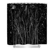 Tulips Decaying At Sunset Shower Curtain