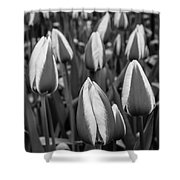 Tulips 3 Shower Curtain
