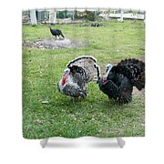 Turkeys In The Yard At Laguna Guerrero Shower Curtain