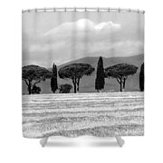 Tuscany Trees Shower Curtain by Julian Perry