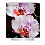 Twin Orchids Shower Curtain