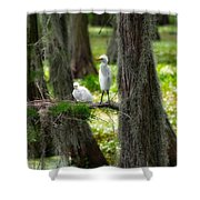 Two Baby Great Egrets And Nest Shower Curtain