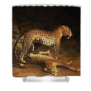 Two Leopards Lying In The Exeter Shower Curtain