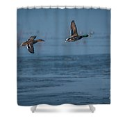 Two Mallard Ducks In Flight Shower Curtain