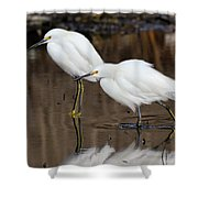 Two Snowy Egrets Shower Curtain