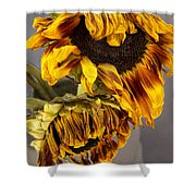 Two Sunflowers Tournesols Shower Curtain