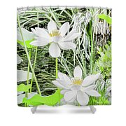 Two Water-lilies Shower Curtain