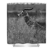 Uganda Cob Shower Curtain