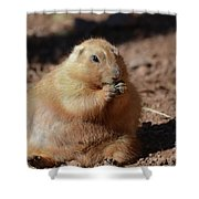 Very Large Overweight Prairie Dog Sitting In Dirt Shower Curtain