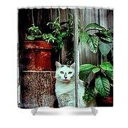 Village Cat Shower Curtain