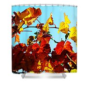 Vineyard 12 Shower Curtain