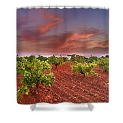 Vineyards At Sunset Shower Curtain