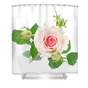 Pink Rose With Buds Shower Curtain