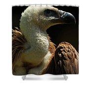 Vulture. Gyps Fulvus Shower Curtain