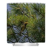 Warbler Shower Curtain