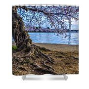 Washington Monument Cherry Blossoms Shower Curtain
